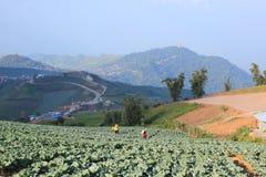 Vegetable Field Stock Photo