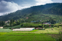 Vegetable field and glasshouse near Ooty. Stock Photos