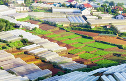 Vegetable field in Lac Duong Royalty Free Stock Photo
