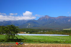 Vegetable field and mountain Stock Images