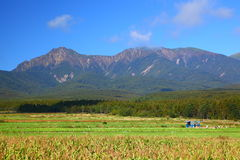 Vegetable field and mountain Stock Photo
