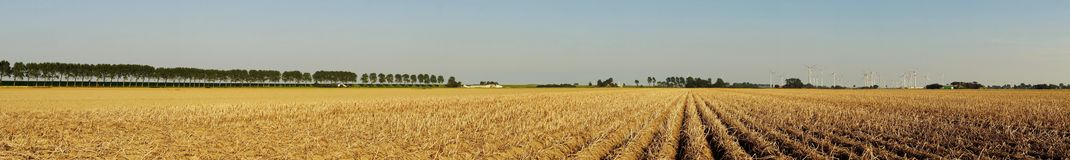 Vegetable field with potato plants. Panoramic view of a large potato field in summer Stock Photos