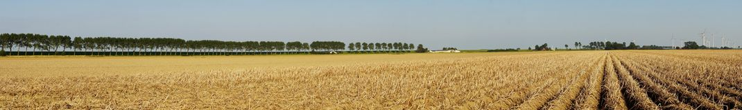 Vegetable field with potato plants. Panoramic view of a large potato field in summer Royalty Free Stock Photos