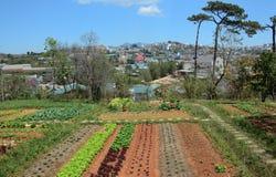Vegetable fields in Dalat Stock Photos