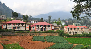 Vegetable fields and house in Dalat Stock Images