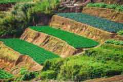 Vegetable fields and Housein highland, Dalat, Vietnam. Stock Photography