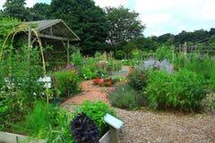 Vegetable Flower Garden Royalty Free Stock Photo