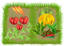 Vegetable food background Royalty Free Stock Photography