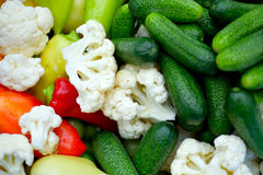 Vegetable. Fresh colorful vegetable is ready for pickling Stock Images