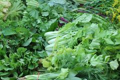 Vegetable. Fresh vegetable in the market Stock Photography