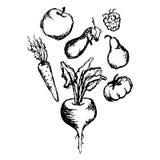 Vegetable fruit monochrome ink hand drawn set vector.  stock illustration
