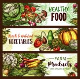 Vegetable, fruit, mushroom banner of fresh veggies. Vegetable, fruit and mushroom banner of fresh veggies. Tomato, carrot and pepper, cabbage, onion and radish Royalty Free Stock Images