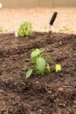 Vegetable Garden. A newly planted vegetable garden Stock Image