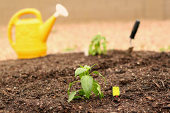 Free Vegetable Garden Royalty Free Stock Image - 10075356
