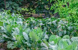 Free Vegetable Garden Royalty Free Stock Images - 101253249