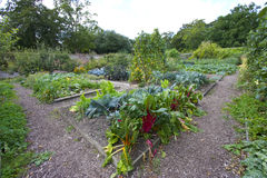 Vegetable garden Stock Photography