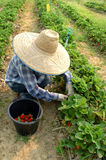 Vegetable garden. In thailand country Stock Photography