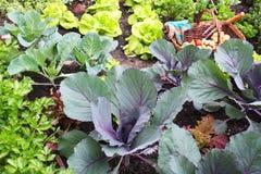 Vegetable garden Stock Images