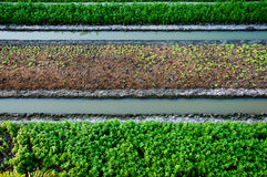 Vegetable garden. Agriculture is the main occupation of the Asians. The majority of Vegetable farmers stock images
