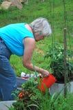Vegetable garden. Stock Images