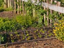 Vegetable garden. Detail of an organic vegetable garden Royalty Free Stock Photography