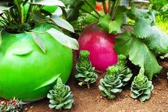 Vegetable in garden Stock Photos