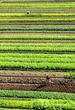 The vegetable garden Stock Image
