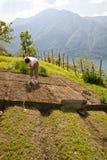 Vegetable garden. Woman working in the vegetable garden stock photography