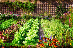 Free Vegetable Garden Royalty Free Stock Photos - 78260188
