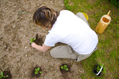 Vegetable garden. A caucasian blond woman working in the vegetable garden planting young plants Stock Photo