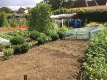 Vegetable garden or allotment. Royalty Free Stock Photography