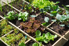 Vegetable garden. With assortiment vegetables and cold container Stock Photo