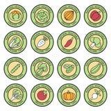 Vegetable garden banner vector Stock Images