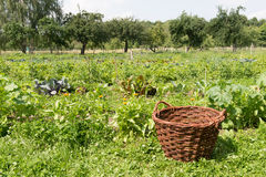Vegetable garden with basket Royalty Free Stock Images