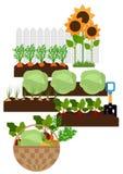 Vegetable garden bed Stock Photos