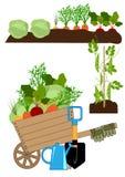 Vegetable garden bed royalty free illustration