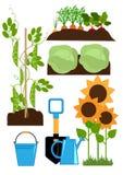 Vegetable garden bed vector illustration