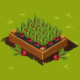 Vegetable Garden Box with Beet. Set 3 Royalty Free Stock Photos