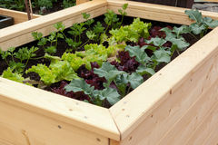 Vegetable garden. Close up of a vegetable garden with different vegetables Royalty Free Stock Photo