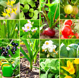 Vegetable Garden Collection Royalty Free Stock Images