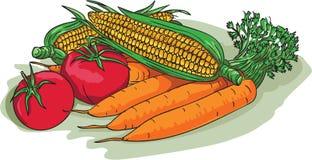 Vegetable Garden Crop Harvest Drawing Stock Image