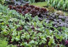 Vegetable Garden. Royalty Free Stock Photography
