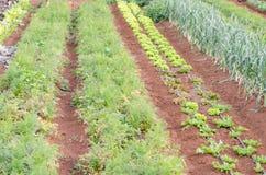 Vegetable garden. Cultivating the garden of vegetables Stock Images
