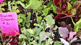 Vegetable garden. Early summer in urban vegetable garden stock video footage