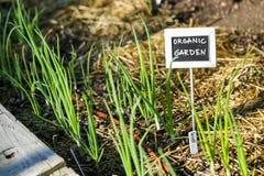 Vegetable garden Royalty Free Stock Photography