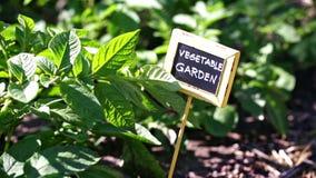 Vegetable garden. Early summer in urban vegetable garden stock video
