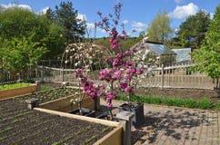 Vegetable Garden. In an English garden. TakenRosemoor, Torrington, North Devon, England Stock Photos
