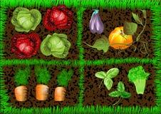 Vegetable garden. 10 EPS, using mesh gradient Stock Images