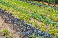 Vegetable garden on  a farm Stock Photo