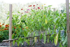 The vegetable garden. And flower-bed Stock Photography